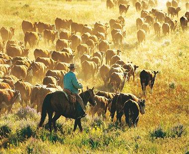Ranchvakanties Amerika