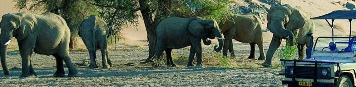 Safari reizen, Namibië, Zuid Afrika, Africa, Damaraland, Tanzania, Kenia, Botswana, zuid afrika, jeepsafari, safari per jeep, safari in jeep,