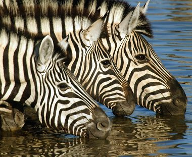 Alle soorten safari reizen op maat