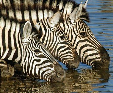 Safari reizen op maat
