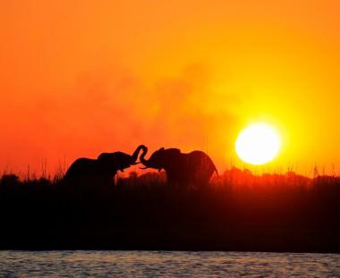 olifanten met zonsondergang tijdens Botswana Wildparks tour via Scenic Travel - Zoetermeer
