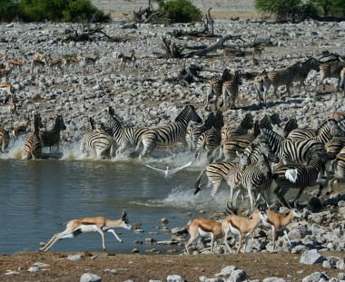 zebra's en impala bij waterpoel tijdens Southern Circle tour via Scenic Travel - Zoetermeer