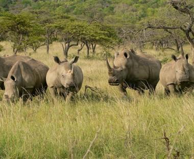 Neushoorns spotten tijdens de Rainbow Route in Zuid Afrika via Scenic Travel - Zoetermeer