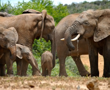 Olifanten spotten tijdens de Scenic Route safari in Zuid Afrika via Scenic Travel - Zoetermeer