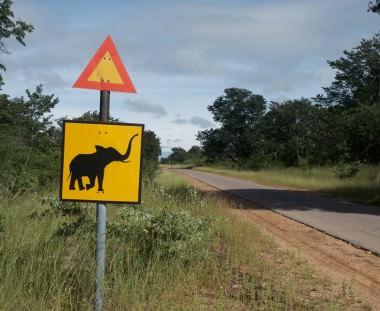 Olifanten zebrapad